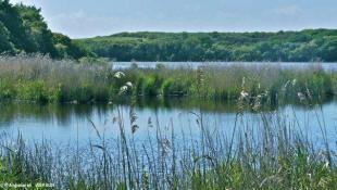 Réserve Natura 2000 de Trunvel.  Les étangs de Trunvel et de Kergalan, les plus grands étangs du Finistère, étaient menacés avec possibilités d'écoulement à travers les galets vers la baie d'Audierne.
